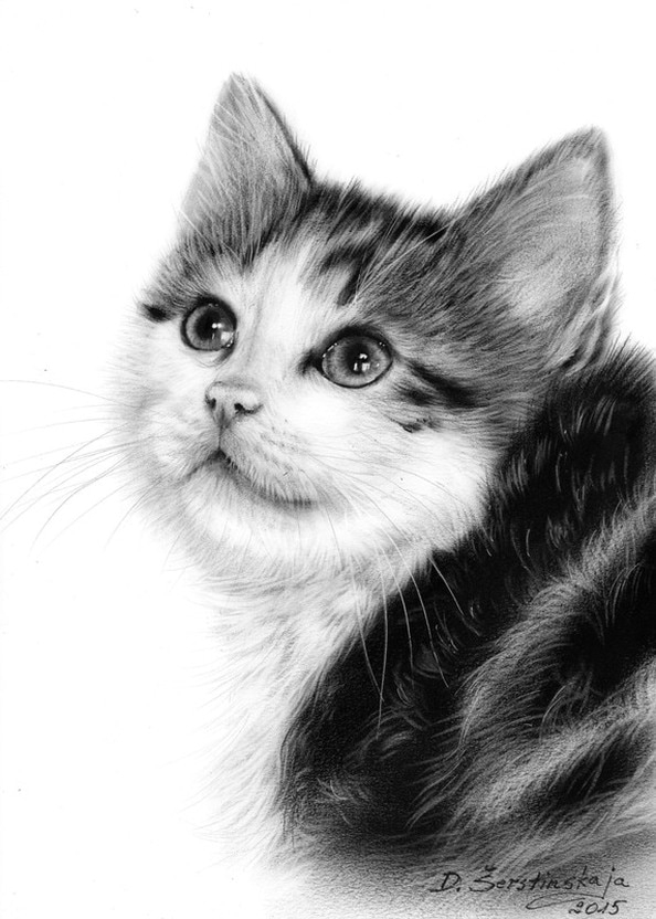 10-Kitty-Ponder-Danguole-Serstinskaja-Paintings-of-Cats-that-look-like-Photographs