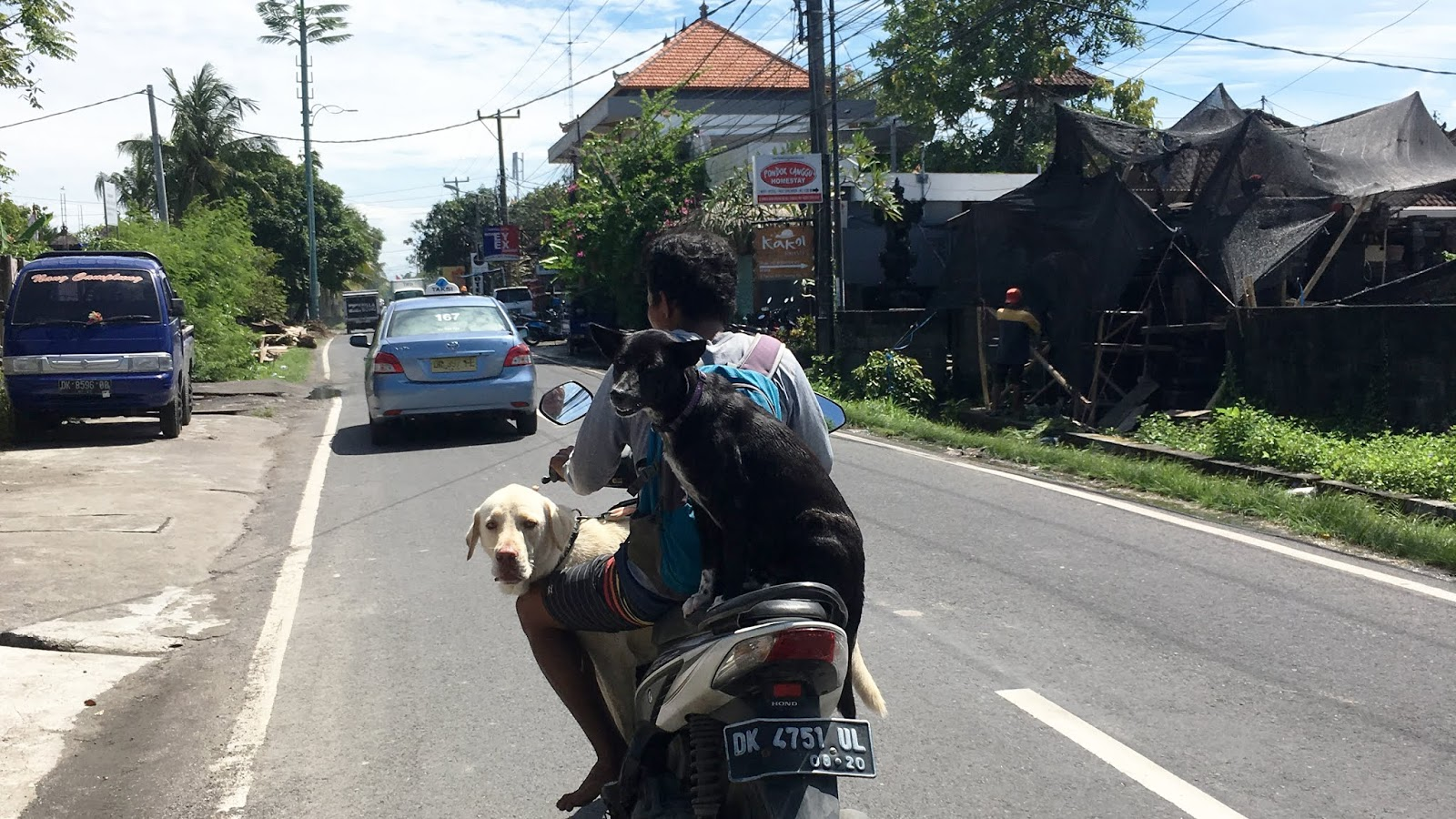 danger conduire scooter bali