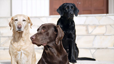 10 Type Most Popular Dog In The World