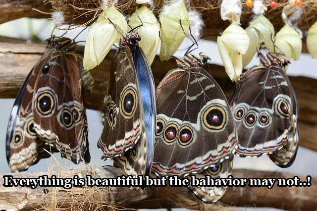 butterfly-as-beauty-symbol