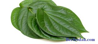 manfaat minum air rebusan daun sirih