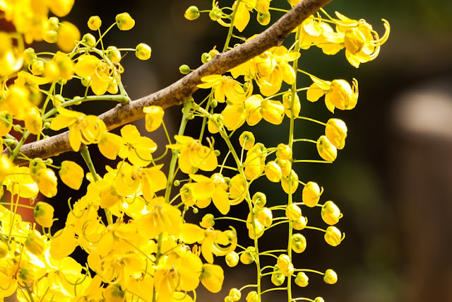 Happy Vishu Wallpapers
