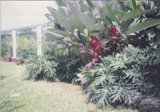 Galeri Taman - Tukang Taman Surabaya 92