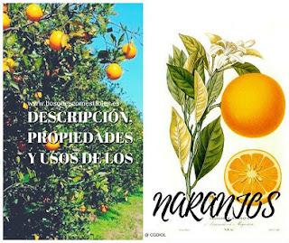 El Cultivo del Naranjo