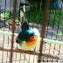Download Suara Kolibri Wulung Gacor Untuk Memancing Bunyi Mp3