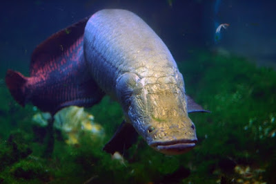 10 Deadly creatures live in the Amazon River