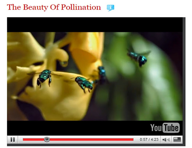 The Beauty of Pollination by filmmaker Louie Schwartzberg on Ted Talks