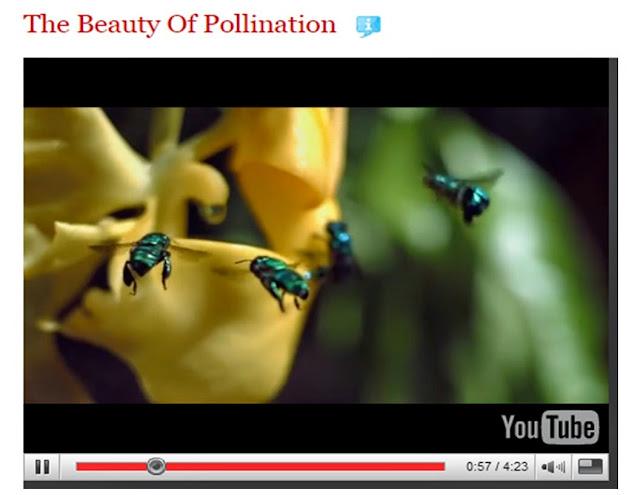 The Beauty of Pollination by filmmaker Louie Schwartzberg on Ted Talks
