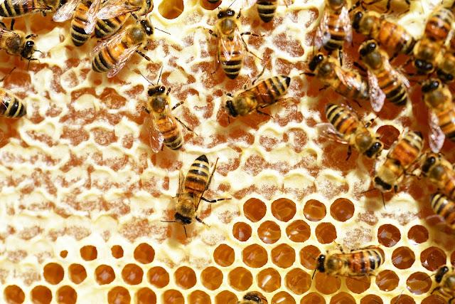 http://www.bioorbis.org/2018/07/como-abelhas-fazem-mel.html