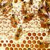 Você sabe como as abelhas produzem o mel?