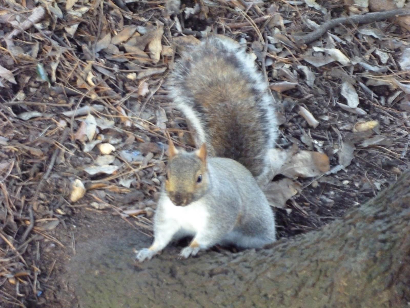 Can Squirrels Eat Rat Food