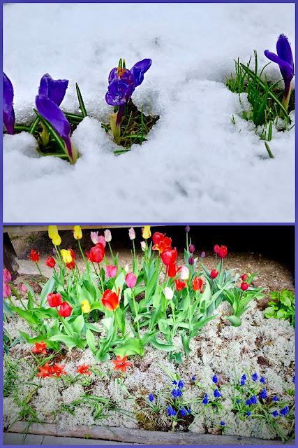 Heinämaan kevät