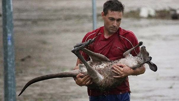 13 beautiful acts of kindness that left me teary-eyed - this man risked his life to save a kangaroo from a flood