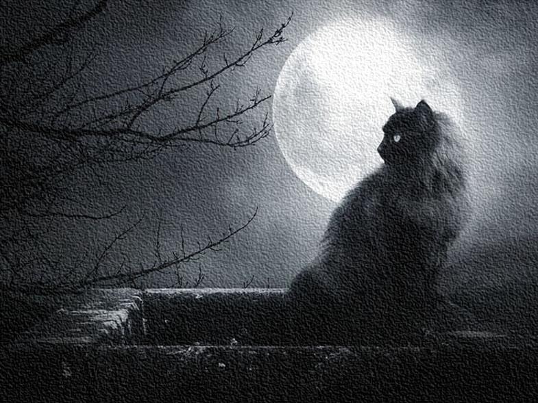 лунный календарь фазы луны