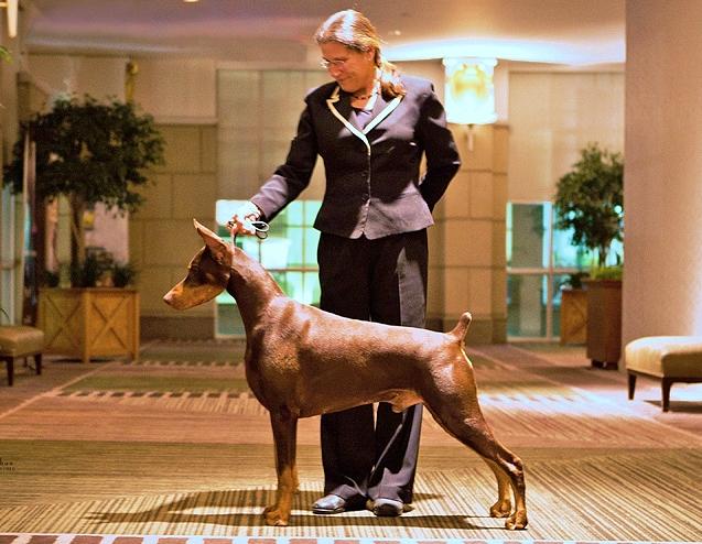 DOG SHOW POOP: 2012-04-15
