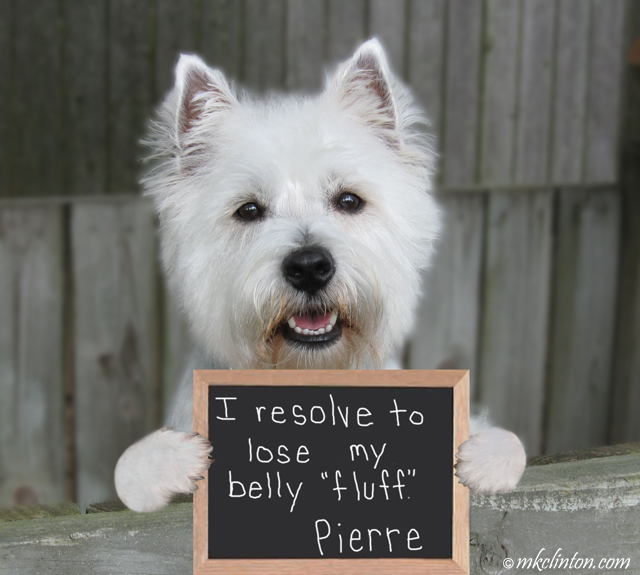 Westie's pledge to lose weight