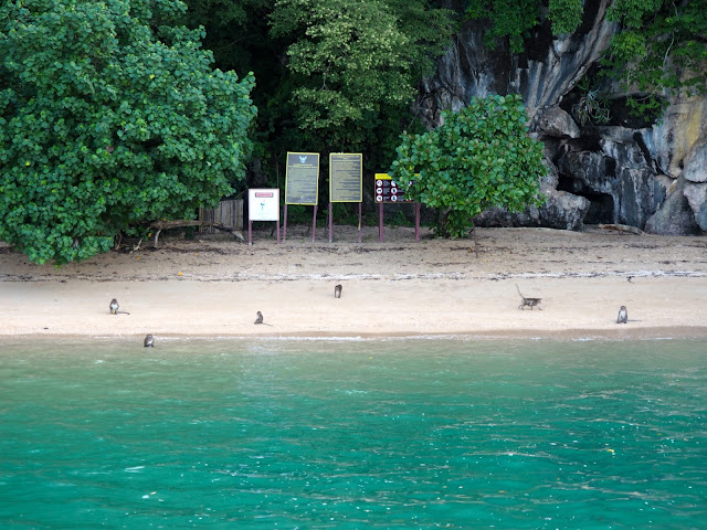 Monkeys on Lawa Island, Phang Nga Bay, Phuket, Thailand