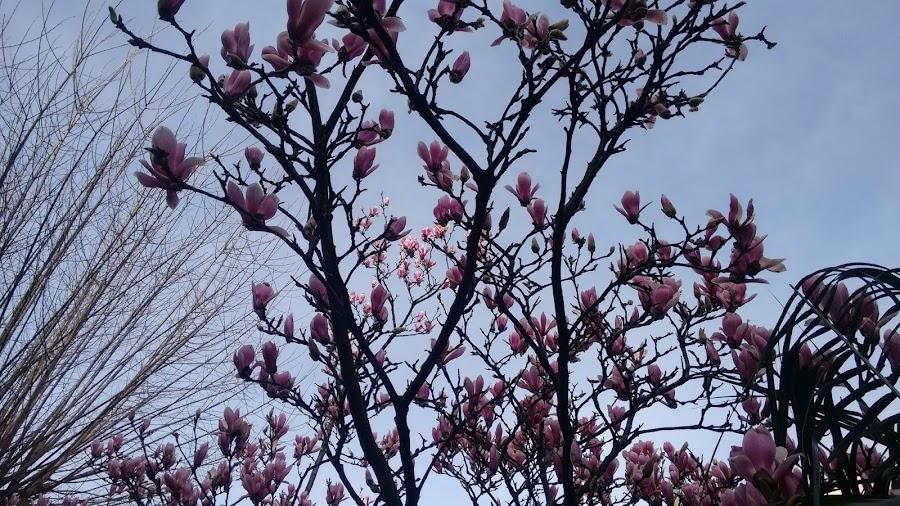 flores-gijon-invierno