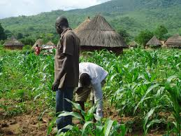 NigerState Agricultural Manifestation; an Example for Nigeria