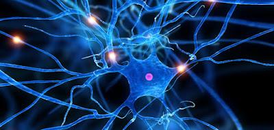 Come curare sclerosi multipla con batterio intestinale
