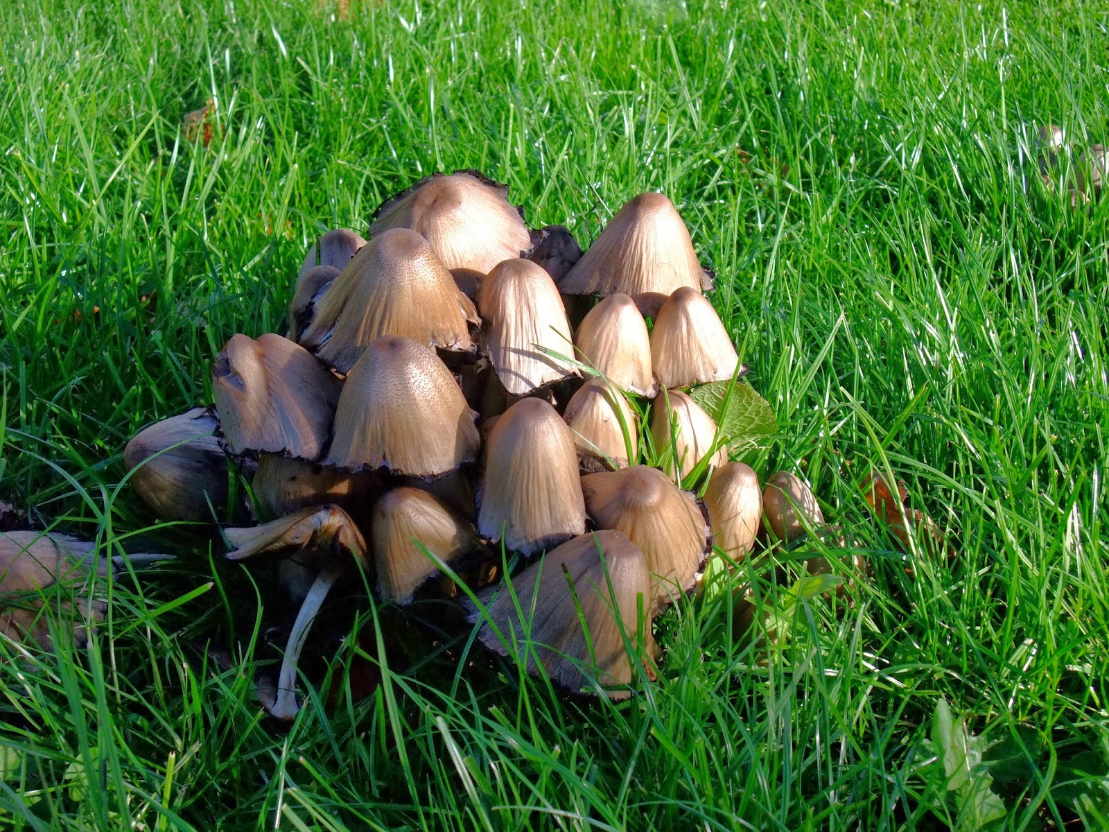 herbal picnic mushrooms