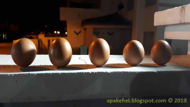 Telur tegak berdiri