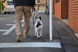 passeio com seu cão