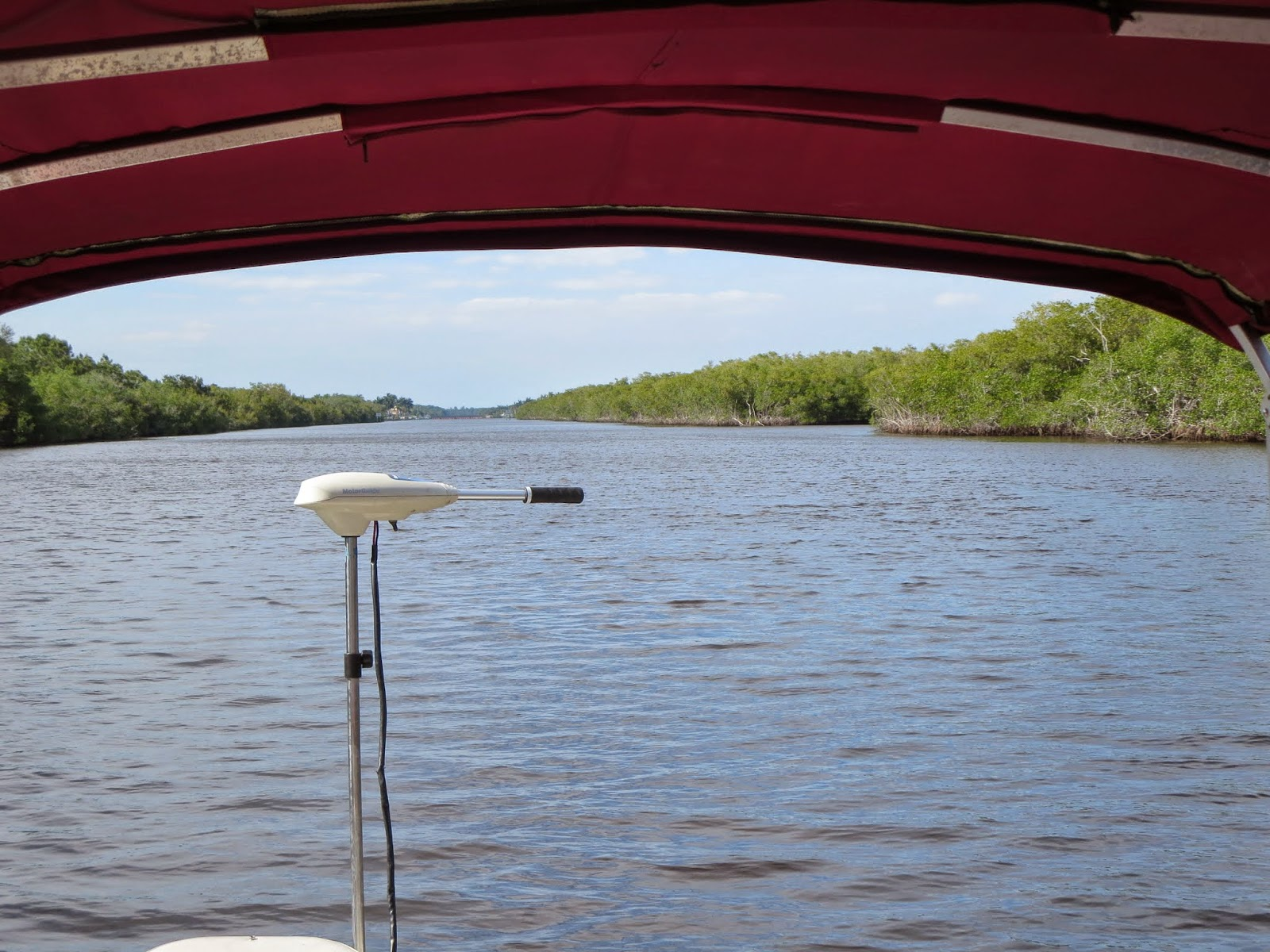 Where to see manatees in Florida: Tiny motor on the boat used to spot manatees near Naples