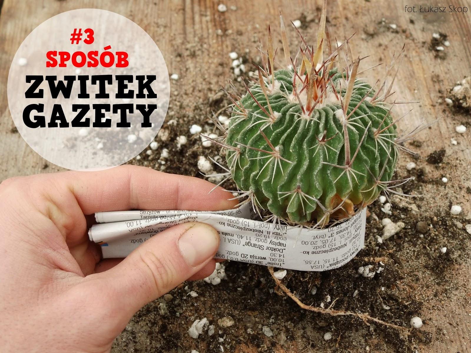 5 Sposobów Jak Przesadzać Kaktusy I Się Nie Pokłuć Bez