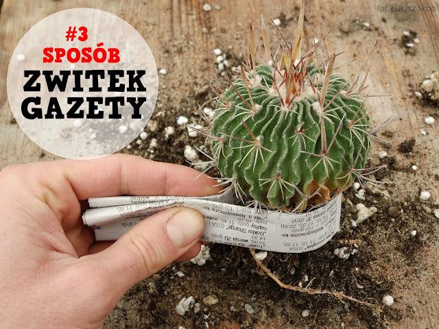 czym przesadzać kaktusy - gazeta