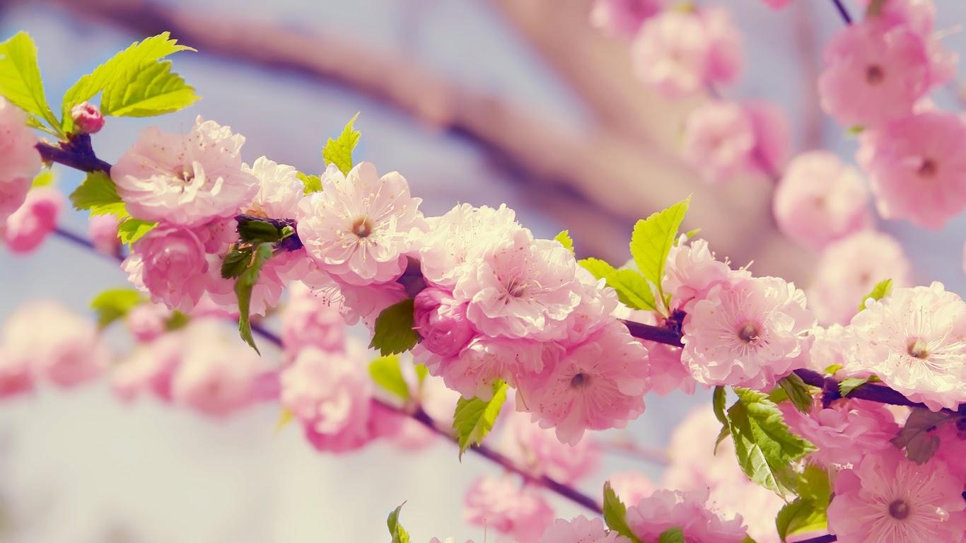 """fr-hling-rosa-bl-ten-zweige-widescreen-auf-dem-330680 Partecipazione """"Gemma in fiore""""Colore Lilla Linea Floreale"""
