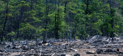 Eksploitasi Hutan