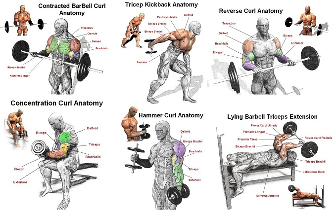 Exercises for Biceps – Best Tips on How to Make