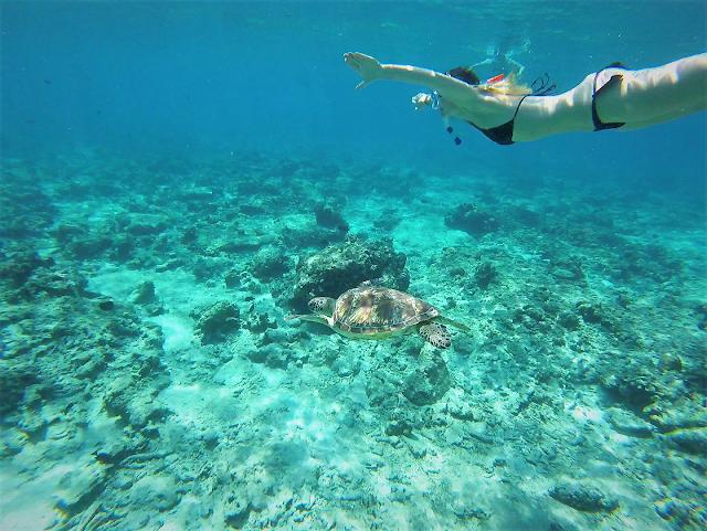 Gili Trawangan Meeresschildkröte