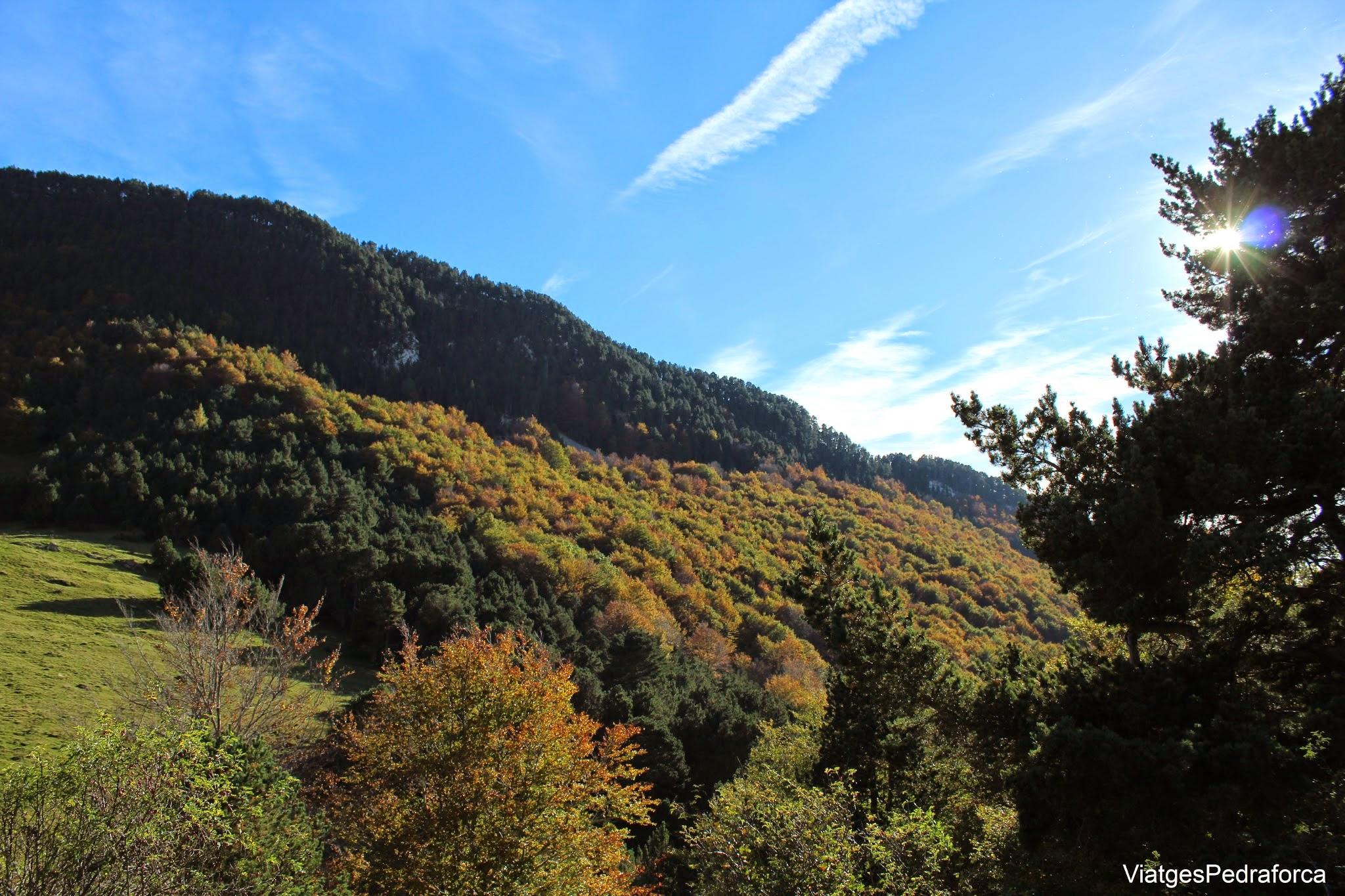 Fageda a la Vall de Ribes Bruguera Sant Amand Ripolles
