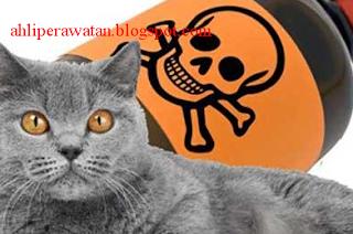 Pertolongan Pertama Cara Mengatasi Kucing Keracunan