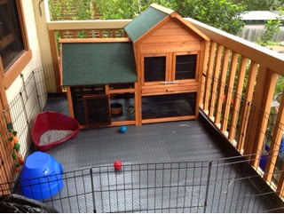 Rabbit Hutch on Verandah with pet fence and litter tray