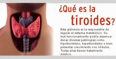 K es la tiroides
