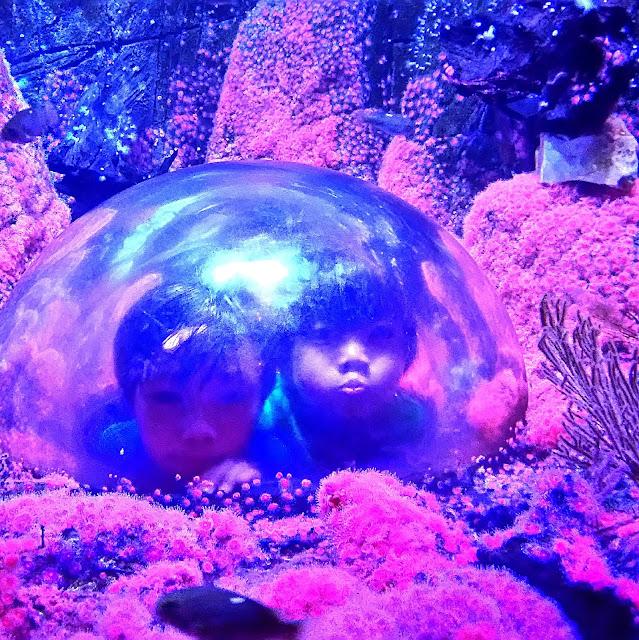 Sea Life Aquarium at Legoland. See more photos at www.growinguphui.com