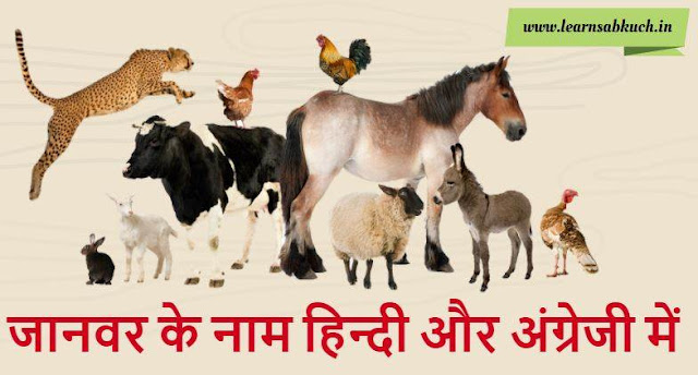 Name of Animal in Hindi and English