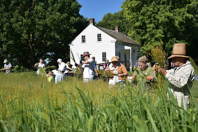 Staff, volunteers, and visitors harvest flax for linen at Landis Valley