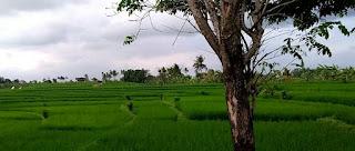 Industri Pertanian