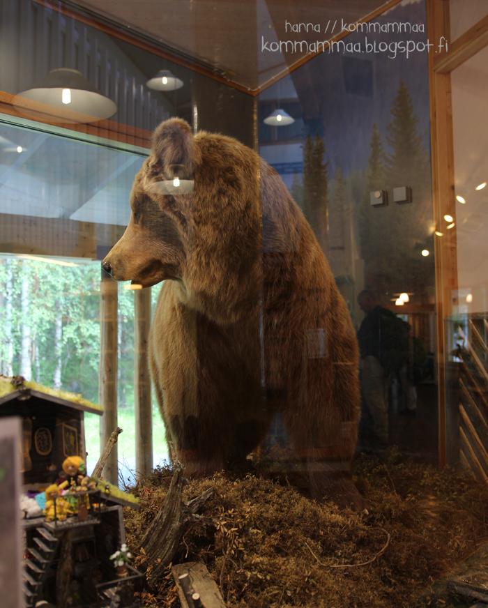kiutaköngäs karhu täytetty kuusamo