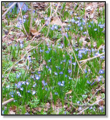 kleine blaue Blumen im Wald