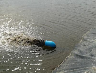 Aquamimicry a revolutionary concept for shrimp farming for Koi pond overflow design