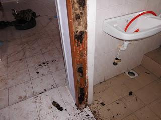 Serangan Anai-Anai di Toilet