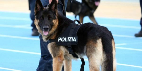 cane-poliziotto-ares-convenzioni