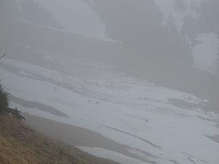 Gämsen im Nebel