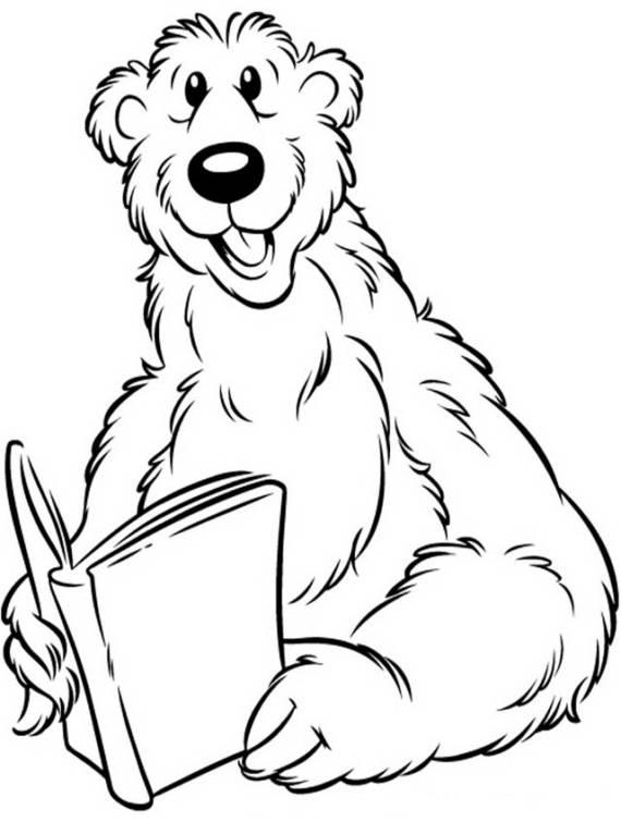 orso, animali, libro,