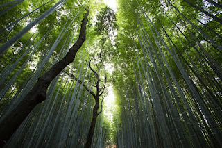 Hutan Lingkungan Hidup